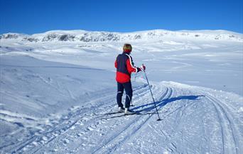 På tur med flott utsikt mot Reineskarvet fra Bergsjøstølen