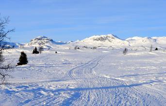 Nyt fjellets stillhet på skitur innover Svarthammar