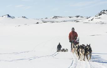 Hundekjøring i Ål