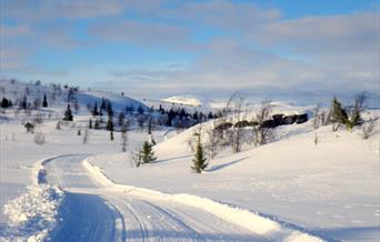 Frå toppen av Øvre-Ålsåsen ned  mot Ål Skisenter