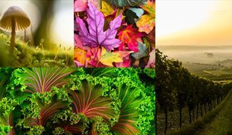 Høstens røde viner fra Italia.