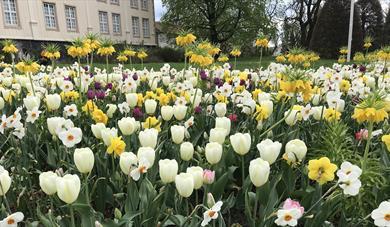 Tulipaneri Brekkeparken