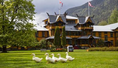 the ducks in the garden at Dalen Hotel
