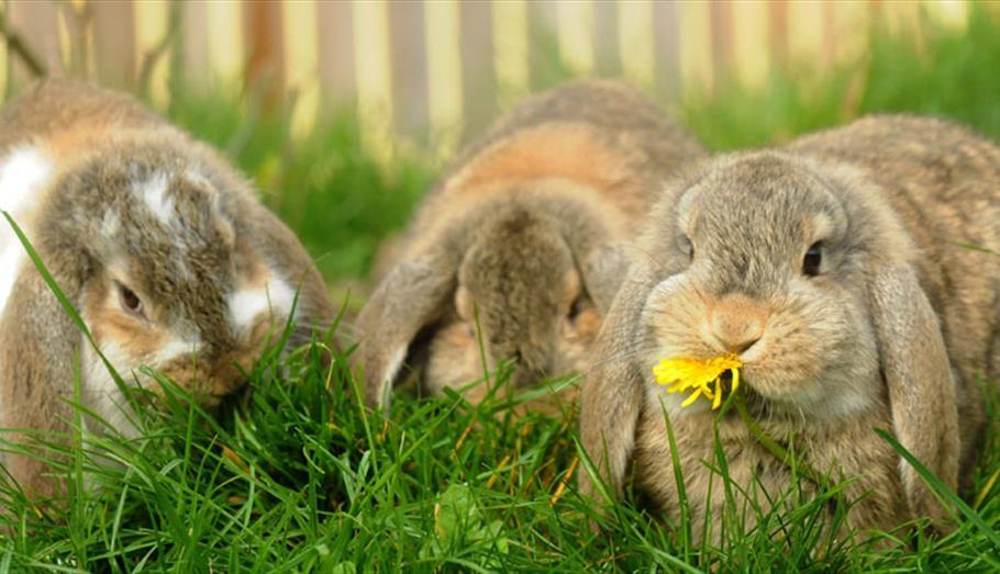 Rabbits at Longleat