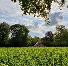 Bluestone Vineyards