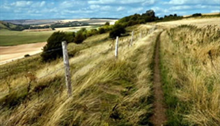 Wiltshire Downland