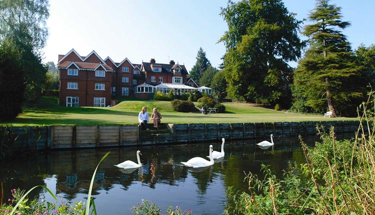Swans on river, hotel in background.