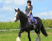 Riding Molly at Rein and Shine