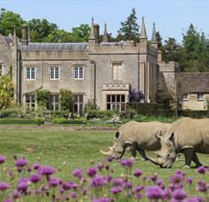 Rhinos on the lawn at Cotswold Wildlife Park