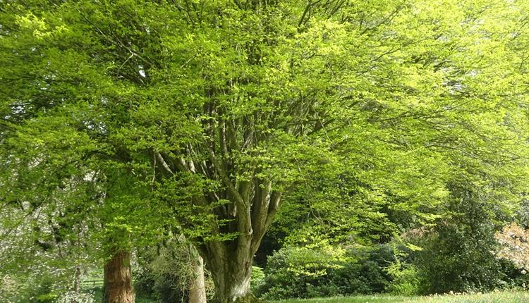 DESIGNING WITH TREES & SHRUBS