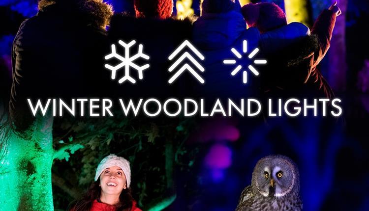 Winter Woodland Lights