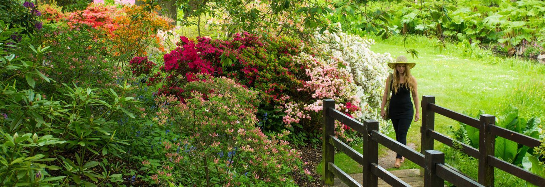 The Savill Garden in the spring