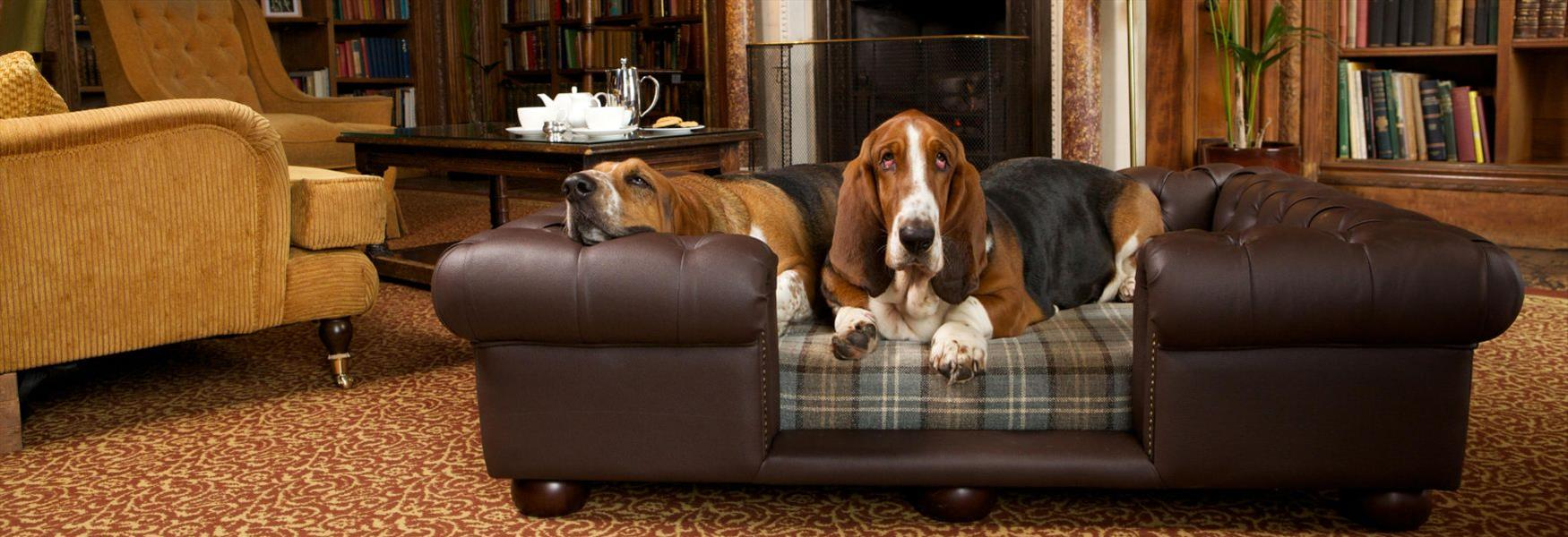 It's a dog's life at Cliveden Hotel