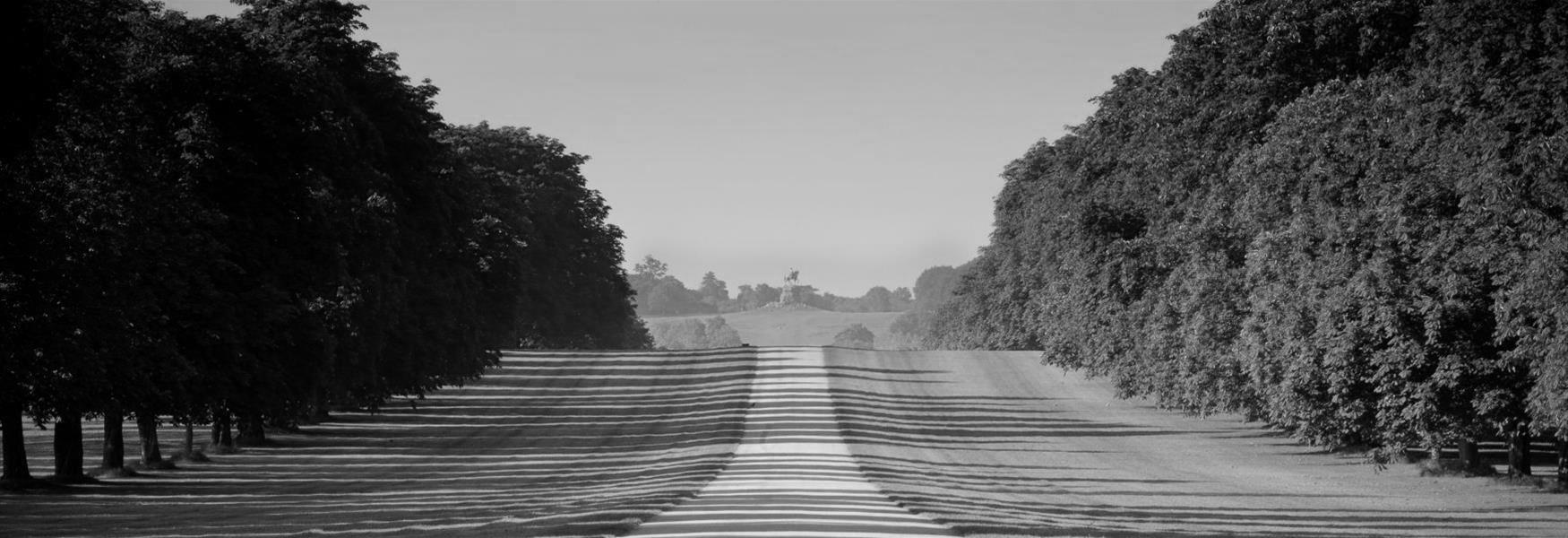 The Long Walk, Windsor Great Park