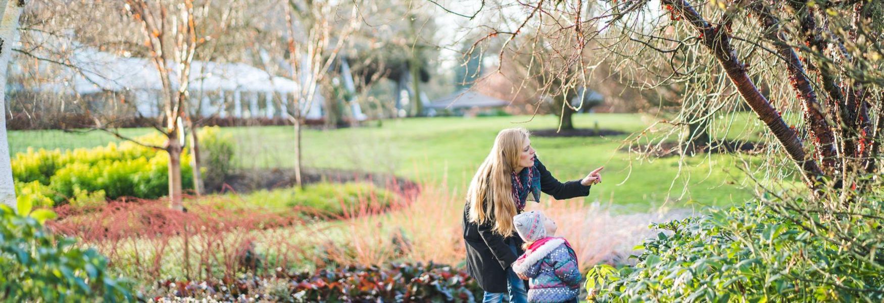 Wintertime in The Savill Garden