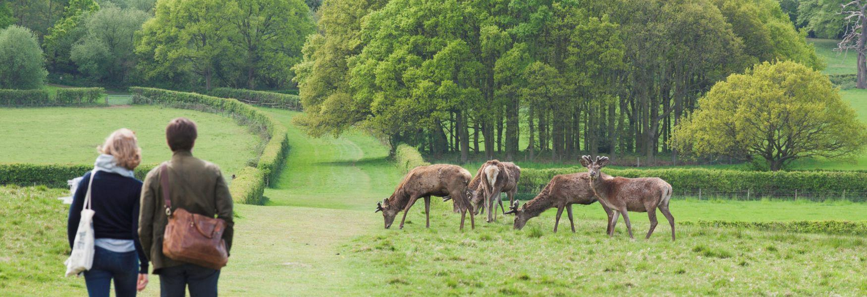 Walkers and deer in Windsor Great Park