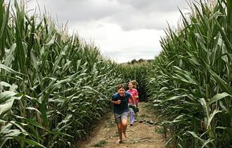 Maize Maze & Pick Your Own Sunflowers