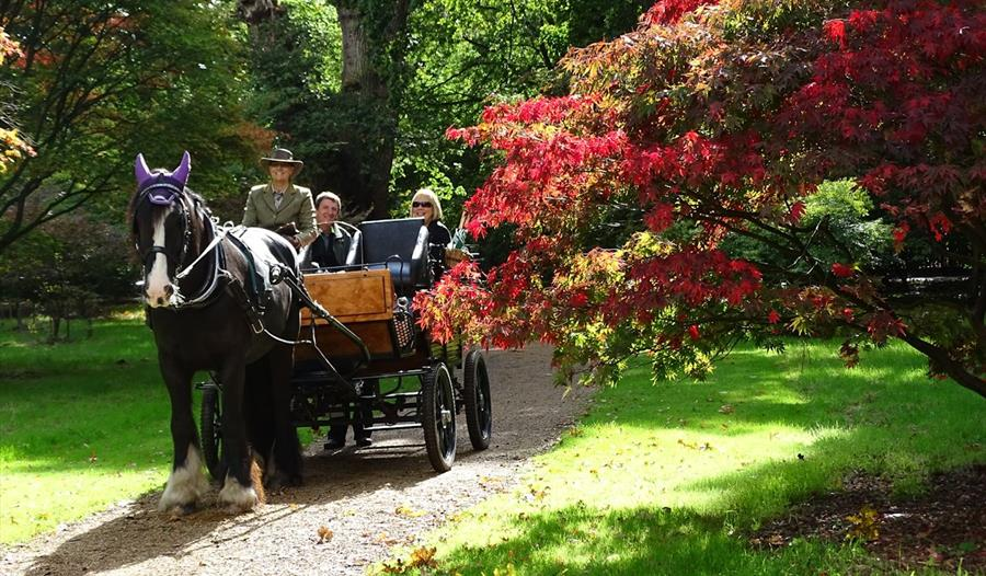Ascot Carriages in Windsor Great Park
