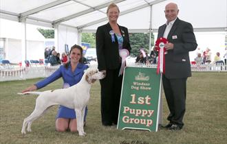 A winner at Windsor Championship Dog Show, Windsor Home Park. Image courtesy Alan Walker