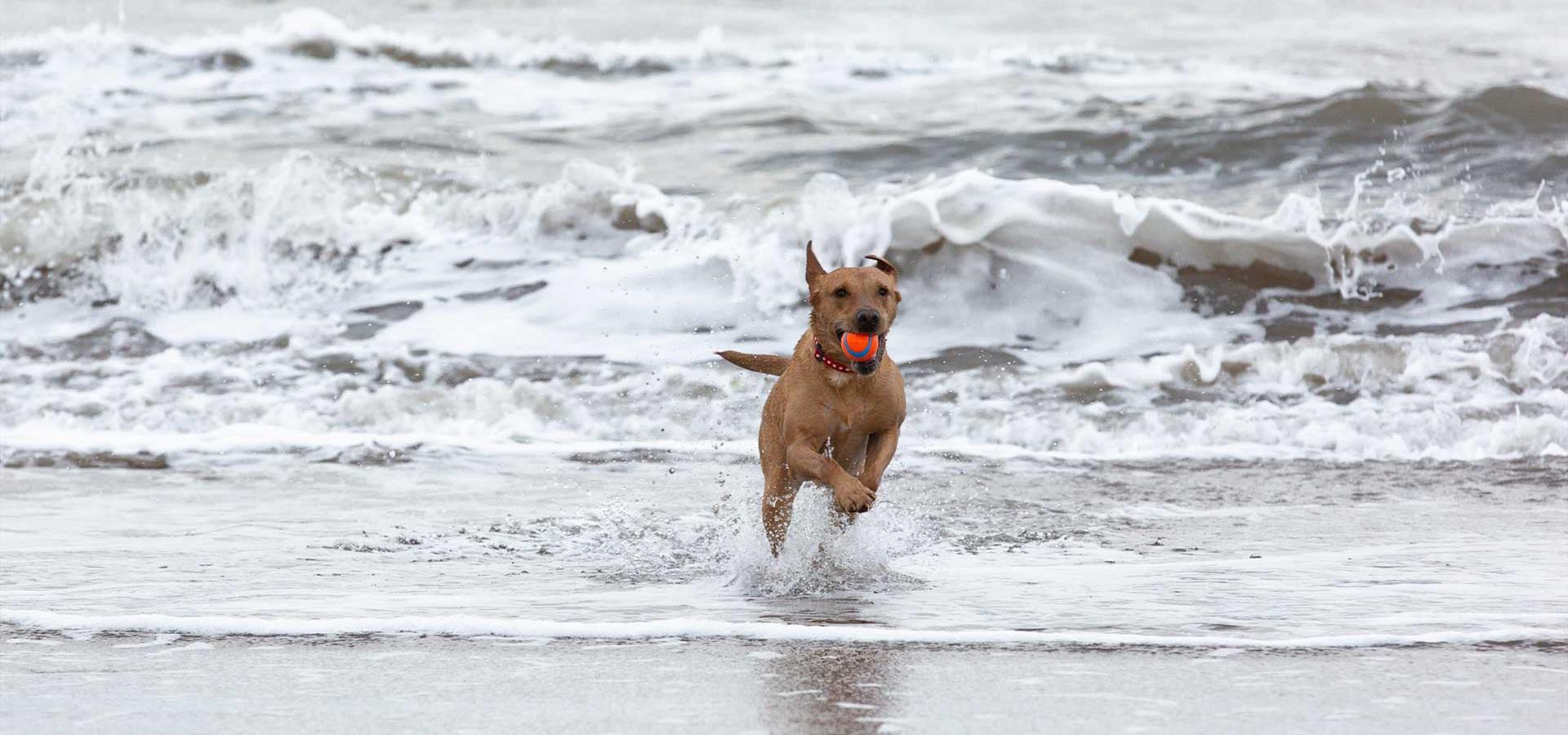 An image of A dog playing in the sea - By Ravage Productions