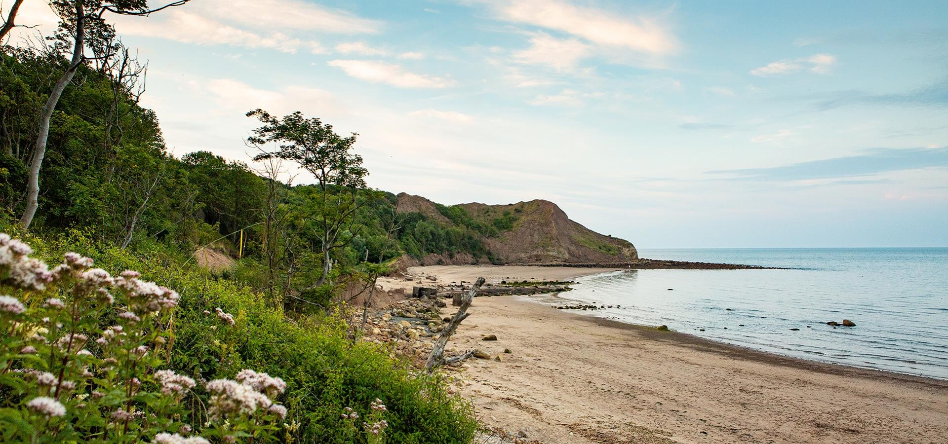 An image of Cayton Bay, by Duncan Lomax