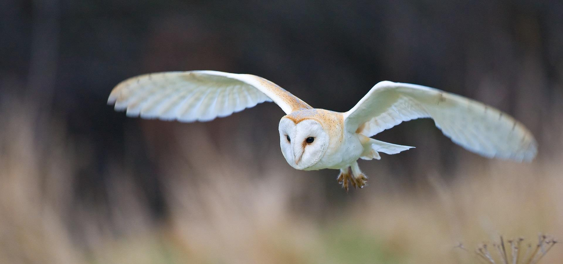Wildlife in North York Moors by Mike Nicholas