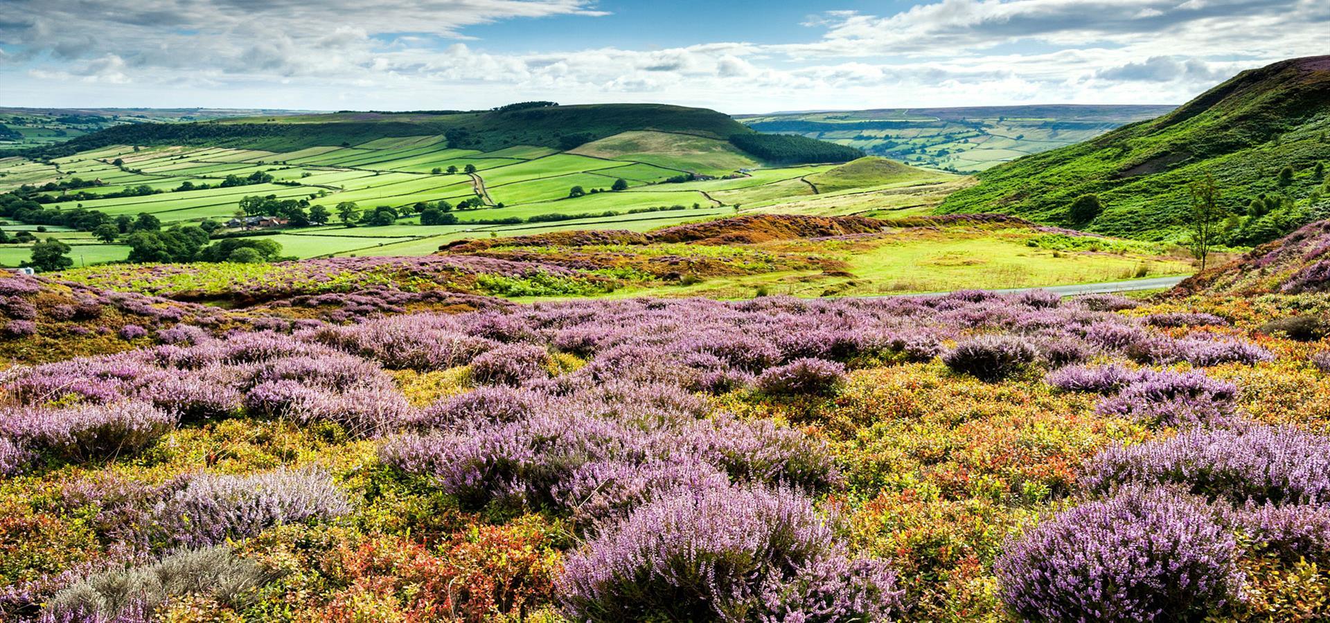 An image of the North York Moors - By Richard Burdon