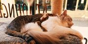 Steampuss Cat Café