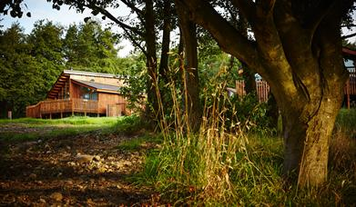 Cropton Cabins - Forest Holidays