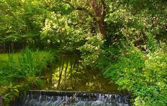Outdoor Yoga & sensory nature walk