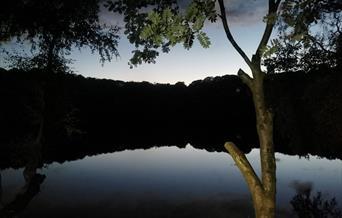 Magical mystery twilight walks