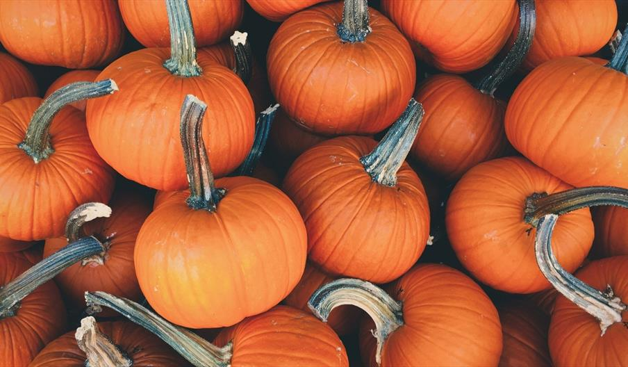 Scarborough Market Halloween Trail