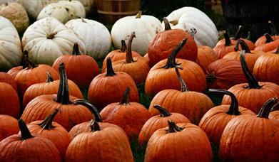 Playdale Pumpkin Patch