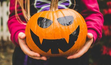 Pumpkin Festival: Pumpkin Picking