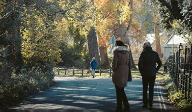 People walking in a park with trees
