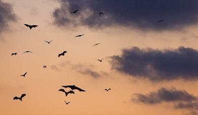 Group of bats flying at twilight hour