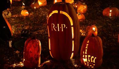 Pumpkin Patch & Halloween Trail