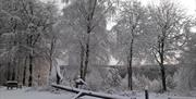 Winter in Dalby Forest