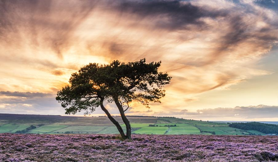 Image of the North York Moors