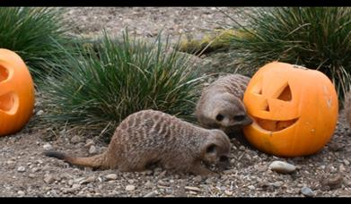 Half Term Halloween at Filey Bird Garden
