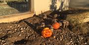 Half Term Halloween