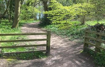 Raincliffe Woods Circular Walks - Wallis Trail