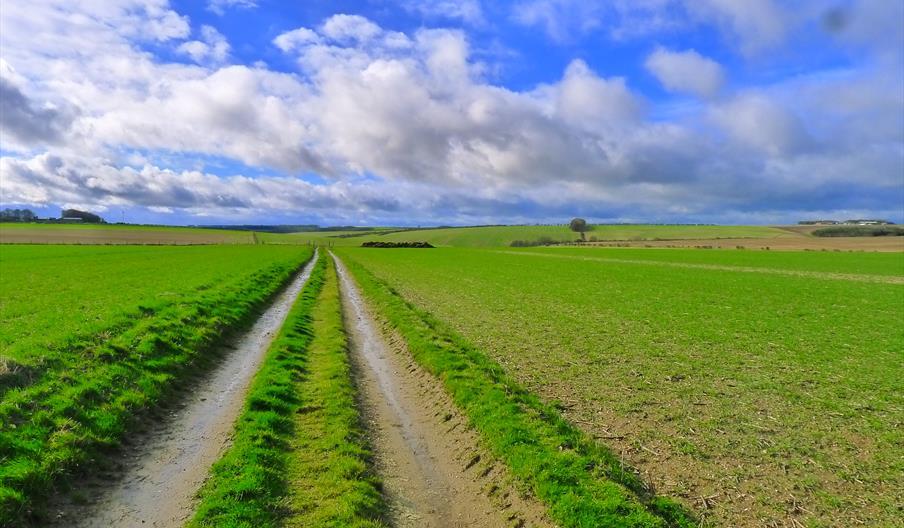 Centenary Way Walk