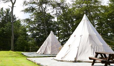 An image of Pinewood Holiday Park