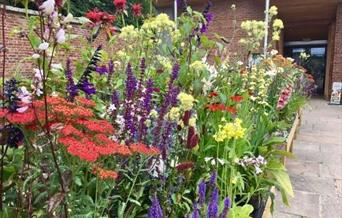 Annual Autumn Plant Fair