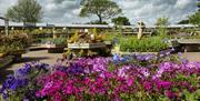An image of flowers at the Eastfield Garden Centre