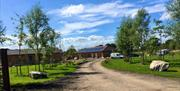 An image of Flaxton Meadows